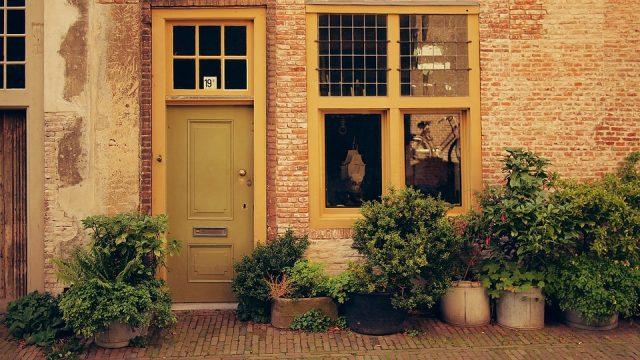 Comment déplacer des plantes lors d'un déménagement : 8 conseils et astuces
